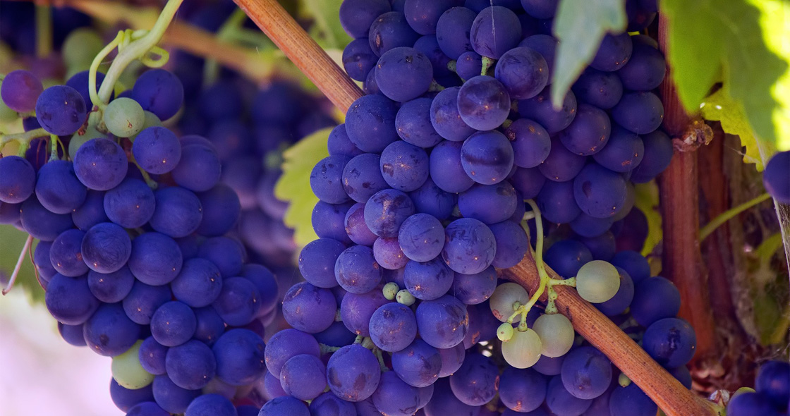 Nαι στις διεθνείς ποικιλίες στα Ελληνικά κρασιά